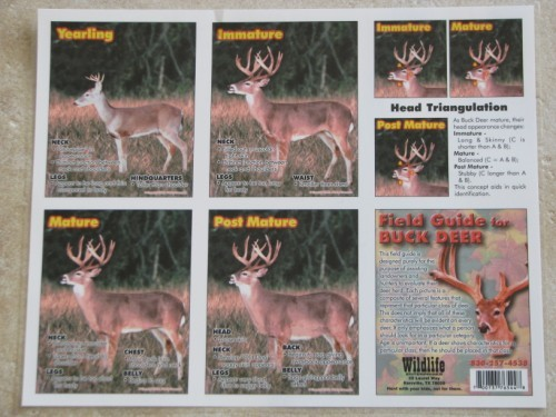 Whitetail Buck Age Chart